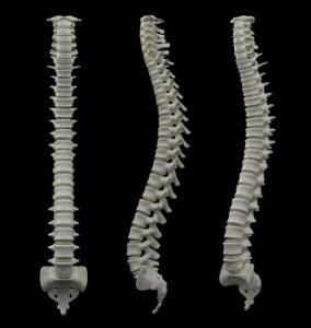 spine-dr-nathalie-beauchamp