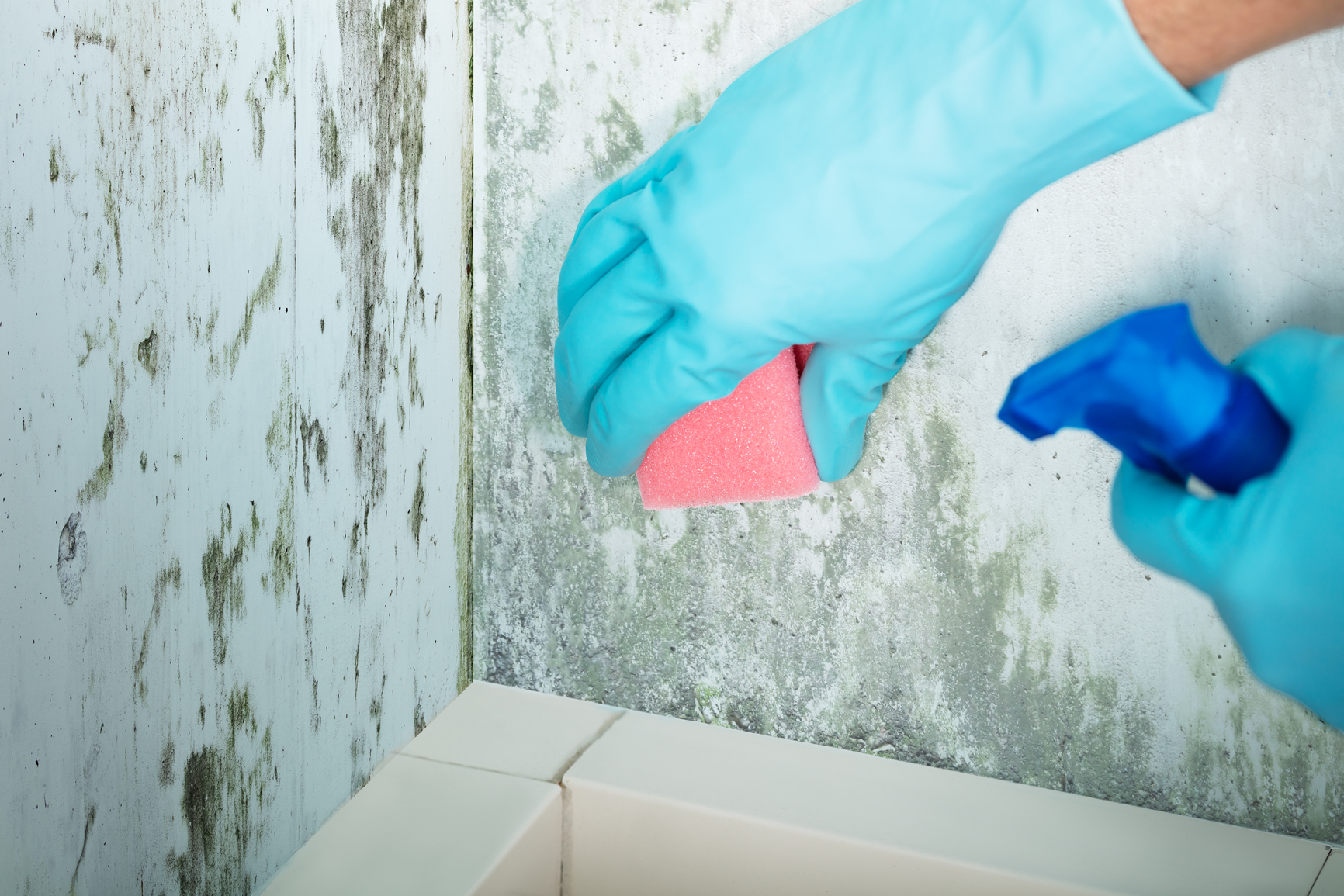Could Mold Toxicity Be Causing Your Health Problems?